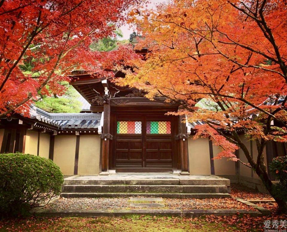 秋風漸起,與TATCHA 相約一場京都雲上紅葉狩