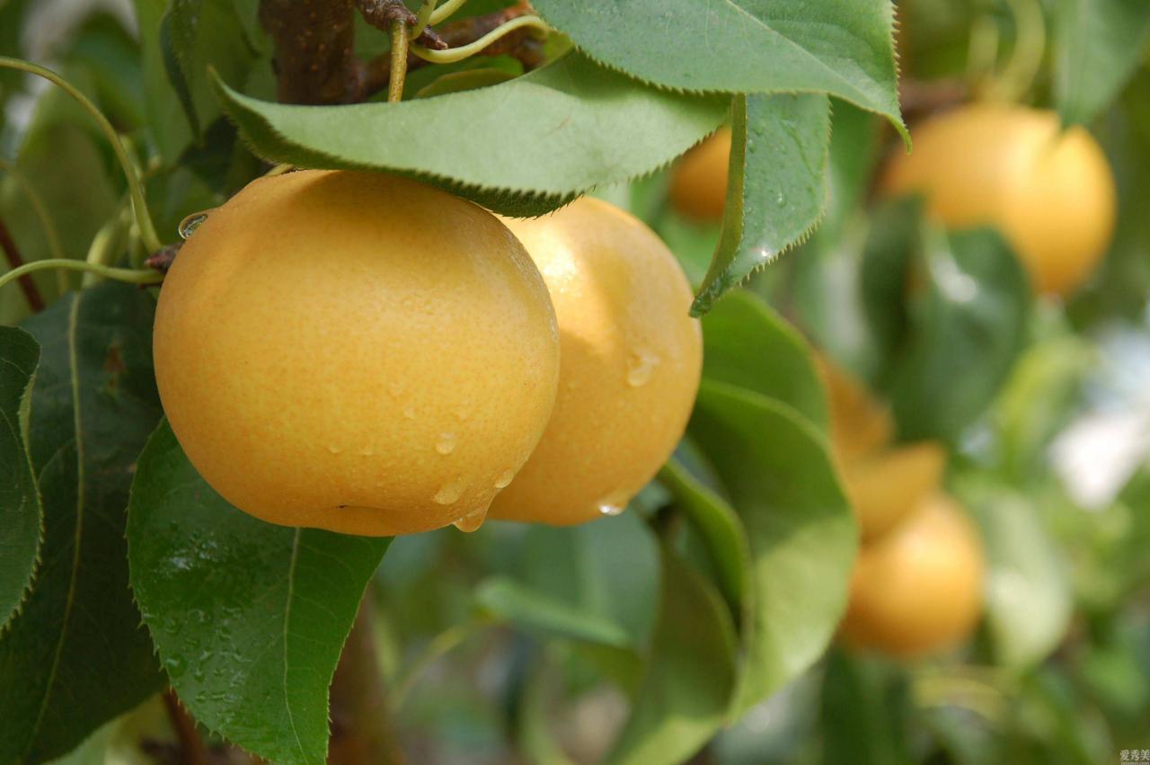 規律飲食,多吃水果,鍥而不舍3個養成好習慣,在冬天也要培養出來健康身體